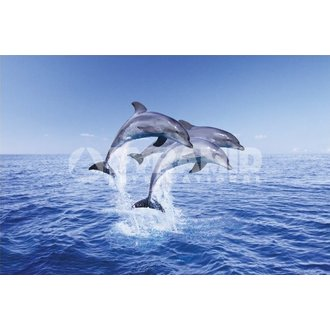 poster Delfin Trio - Pyramid Posters, PYRAMID POSTERS